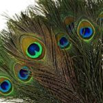 You can never go wrong with peacock feathers. They made a great addition to the hats! Alice in Wonderland tea party sources | Halfpint Design