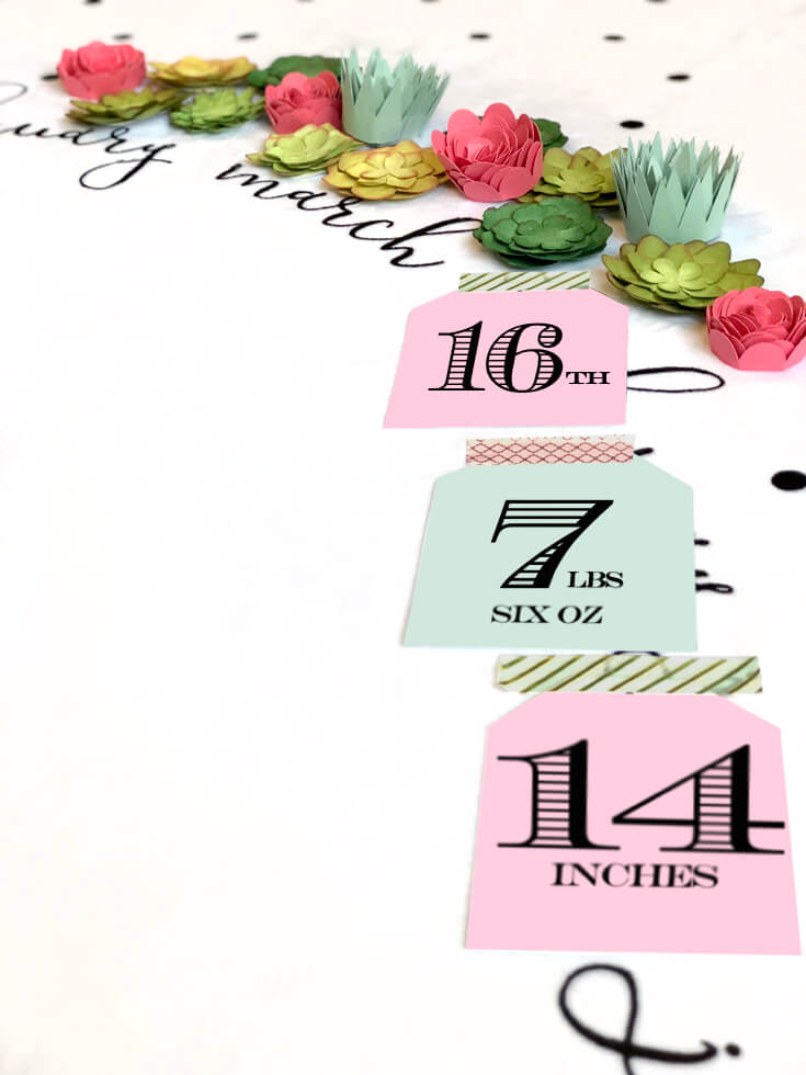 Baby Milestone Blanket photo backdrop, flowers and succulents for newborn photography. Birth Announcement. Halfpint Design