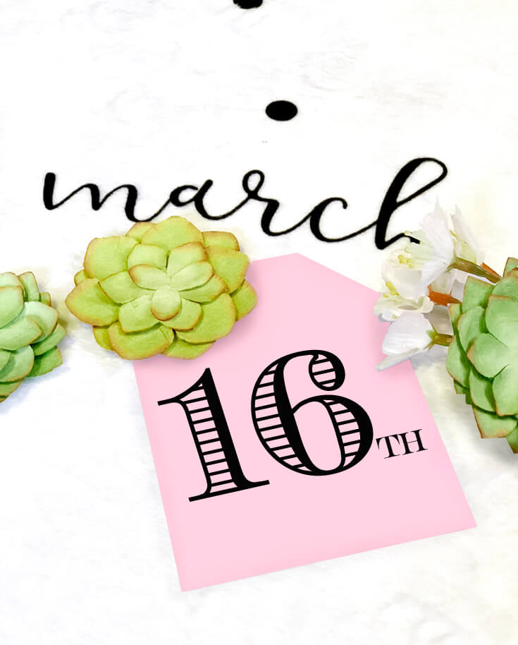 Baby Milestone Blanket photo backdrop, oval of flowers and succulents for newborn photography. Due date announcement. Halfpint Design