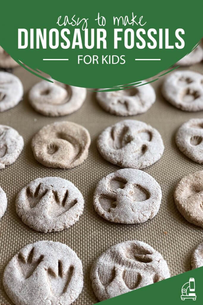Baked salt dough dinosaur fossils for kids