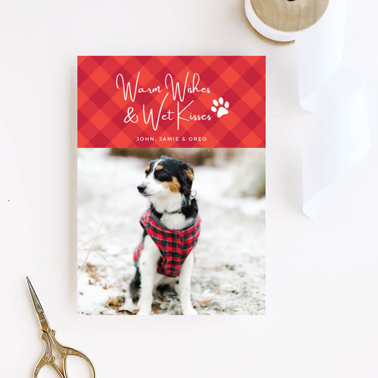 Dog wearing plaid vest for Christmas card