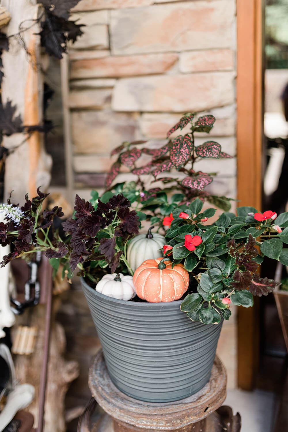 Gourds in potted plants for front porch decoration