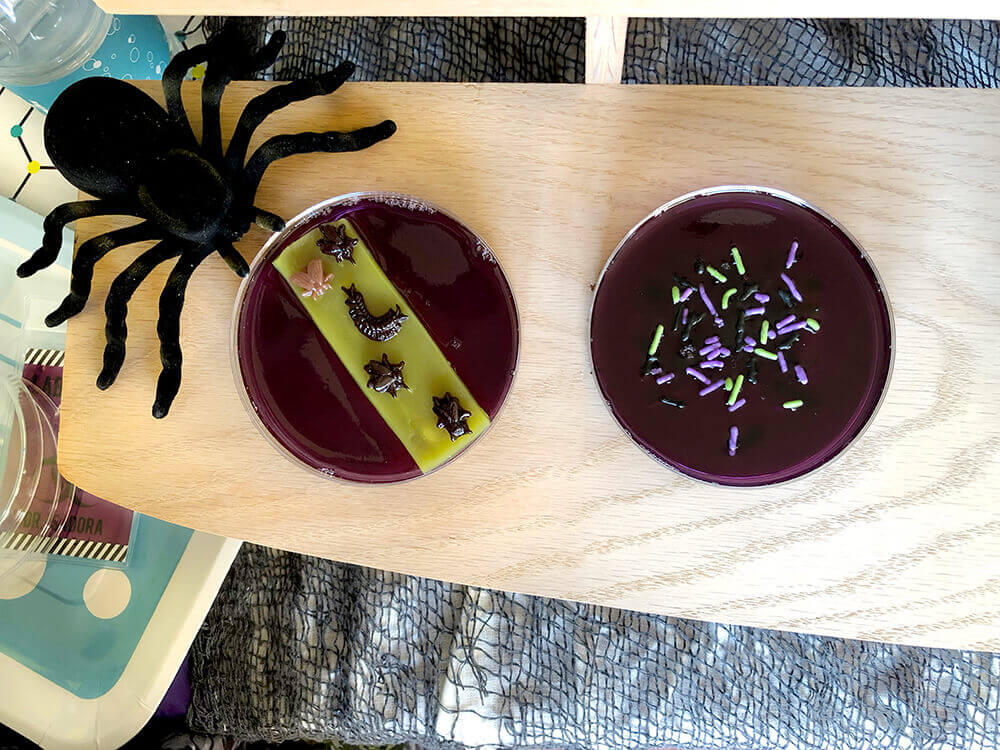 Jello petri dishes with bugs and spiders