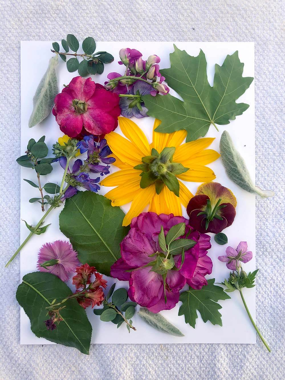 Flowers arranged on paper ready to get hammered